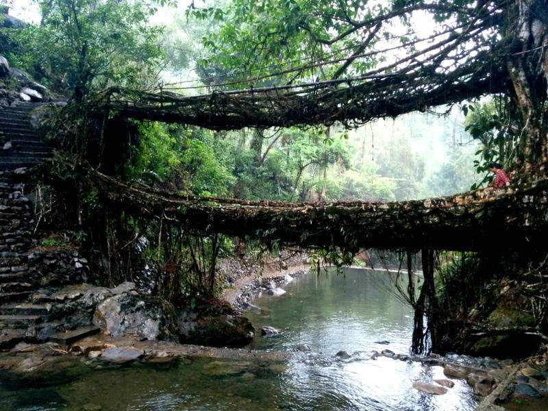 Double decker living root bridge, Nongriat Village